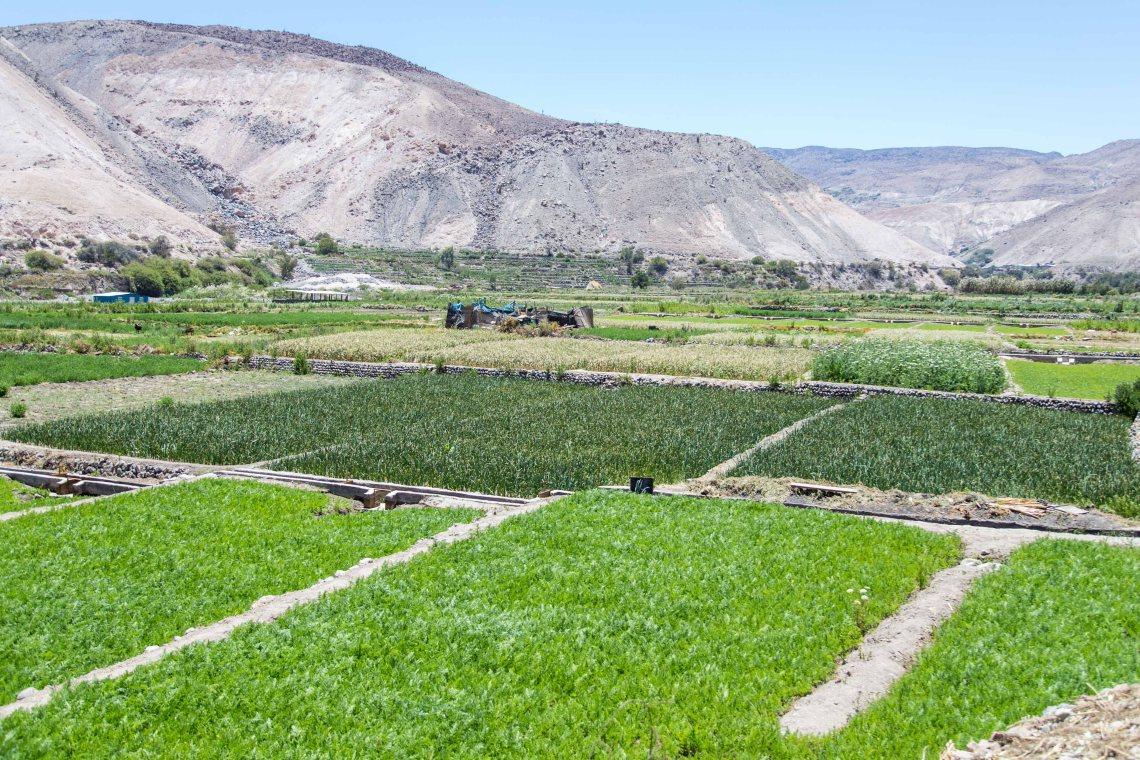 Agricultura de quebradas (1)
